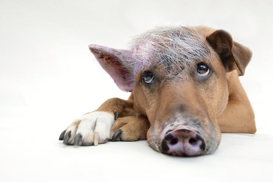 Mein innerer Schweinehund und ich – eine glückliche Beziehung